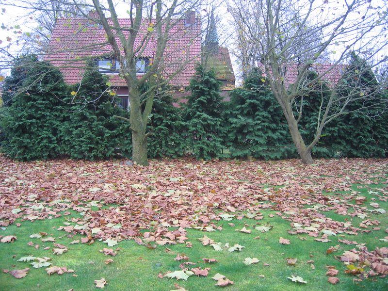 Gartenbilder Herbstlaub mit Spike 009